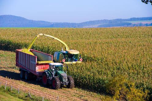 intensive corn production