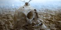 Contemplating human extinction