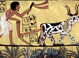 Biotechnology timeline: Humans have manipulated genes since the 'dawn of civilization'