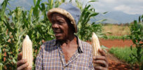 Viewpoint: Undue precaution—'Achilles heel' blocking expansion of biotech crops in Africa