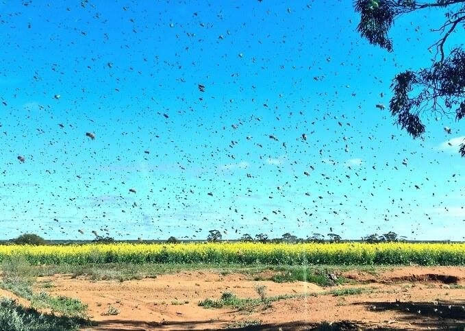 bee numbers