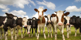 Climate conundrum: Weather changes causing more diseases in livestock that lead to methane release and higher temperatures