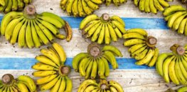 From disease-resistant bananas to biofortified potatoes, gene editing could make our food more plentiful and nutritious