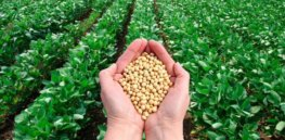 How do you make a GMO? FDA's step-by-step guide to genetically engineering a crop