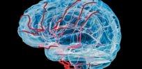brain computer interface vein