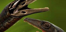 buriolestes schultzi dinosaur brain