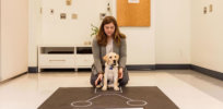 'A million years of memory and history, biology and psychology': The science behind what makes the dog-human bond so unique