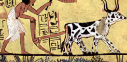 5 foods that have shaped landscape, culture and politics throughout history