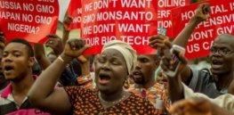 Viewpoint: 3 anti-GMO myths that hinder Nigeria's adoption of biotech crops