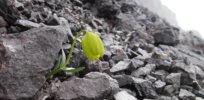 Plants are evolving to look like their surroundings to protect themselves from scavenging humans