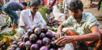 Bangladesh could double crop production by 2030 with help of GM technology, experts say