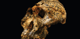 Skull of two-million-year old human cousin found in South Africa illustrates how ancient species adapted to new challenges