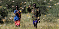 High-tech solutions emerge to help quell Africa's catastrophic locust outbreak – the worst in decades
