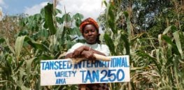 Molecular breeding accelerates disease-resistant crop production—needed more than ever in developing world