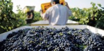 Viewpoint: Europe's globally important wine industry threatened by pesticide, biotech phobias