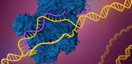 Diseases once thought incurable are now on the cusp of treatments. It's because of CRISPR. Here's a primer