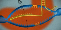 3 new ways CRISPR is revolutionizing biomedicine