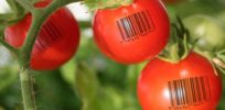 Synthetic DNA barcodes on fruits and vegetables could open the door to food and agricultural transparency