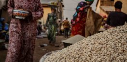 Up to 10,000 Nigerian farmers projected to grow insect-resistant, GM cowpea in 2021