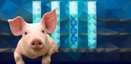 Streamlining animal biotech rules unlikely as FDA rejects USDA proposal to take over regulation, citing 'potential health repercussions'