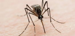 Video: Why mosquitoes choose you