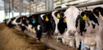 Eliminating dairy cows would reduce US greenhouse gas emissions just 0.7 percent while cutting essential nutrient supply, study finds