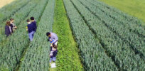 Viewpoint: Agroecology advocates threaten California agriculture with 'primitive' farming practices