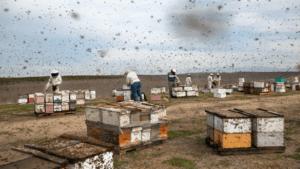 mag bees slide xch videosixteenbyninejumbo