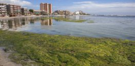 Microalgae could help remove nitrates, phosphates and herbicides from polluted waterways