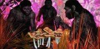 Did magic mushrooms and other hallucinogens fuel human evolution?