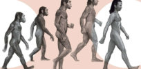 We were never alone: How many human species have existed?
