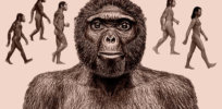 """How the fossils 'Lucy' and """"Ardi' changed our understanding of human history"""