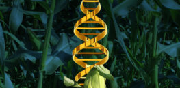 Genome editing poised to secure global food supply, study finds