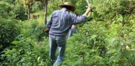 Machetes, not glyphosate: Mexican president tells farmers to manually remove weeds following herbicide restrictions