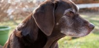 Methusalah dogs are pushing the boundaries of cognitive science