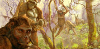 Our early human ancestors may have climbed trees and swung along branches like chimpanzees