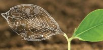We could face a global food crisis by 2050. Is synthetic biology the solution?