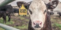 Viewpoint: Animal agriculture offers potentially 'game-changing solutions' to climate change