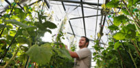 Canada exempts gene-edited plants from regulatory review, speeding new crop development