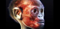 What did Lucy and the Taung child look like? Early human ancestors get reconstructed faces