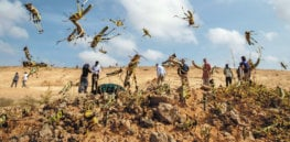 Namibia begins pesticide spraying to end locust infestation threatening its crop-producing regions