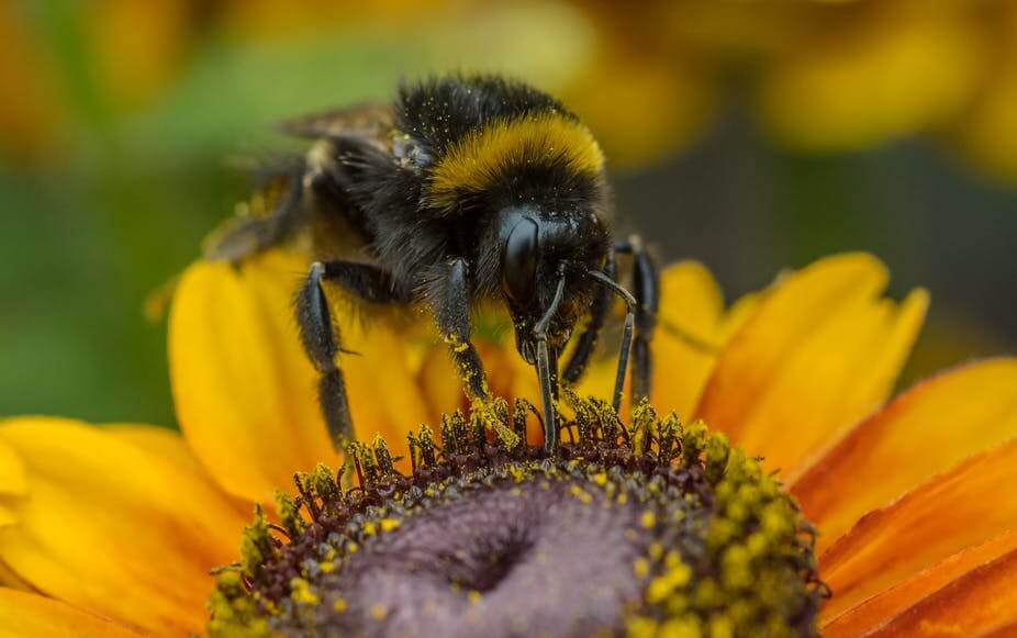 'Realistic' exposure to insecticide sulfoxaflor poses no notable risk to honeybees, study shows
