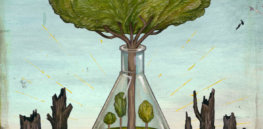 Sierra Club endorsement of disease-resistant chestnut tree divides the anti-GMO movement