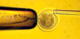 Human embryo research restrictions: Scientists move to drop 14-day limit on research