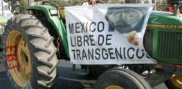 Mexico's proposal to phase out glyphosate, GM corn spurs 'across-the-board' farmer opposition, USDA says