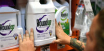 Viewpoint: Glyphosate weedkiller is dangerous and should be banned, or the $11 billion Roundup settlement is a legal 'shakedown'