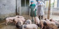 Biden Administration reviewing USDA proposal to take over animal gene-editing regulation from FDA