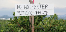 EU 'Green Deal' could mandate 50% cut in pesticide use, include tax on 'most dangerous' chemicals