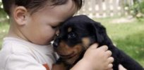 Why do we find puppies more adorable than babies? The neuroscience of cuteness