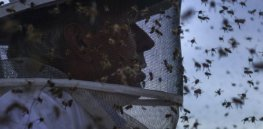 Viewpoint: A world without pollinators? Don't fall for 'lurid tales of bee Armageddon'
